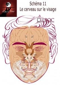 Schéma11 - Le cerveau sur le visage