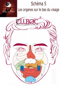Schéma5 - Les organes sur le bas du visage