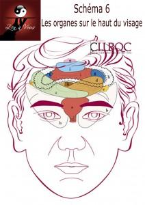 Schéma6 - Les organes sur le haut du visage